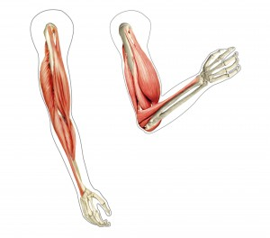 Range of Muscle Motion